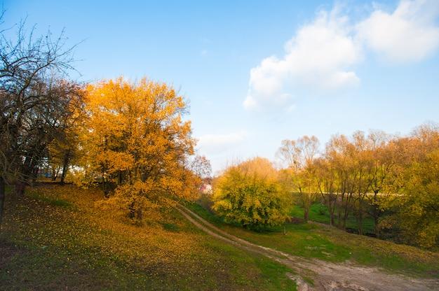 秋の森への道。田舎道と秋の森