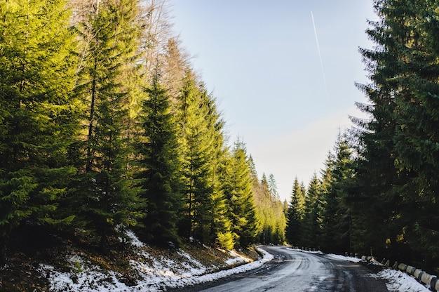 山への道。木々の間の旅。森のある道の眺め。冬の風景です。