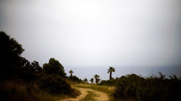 ヤシの木を通って海への道