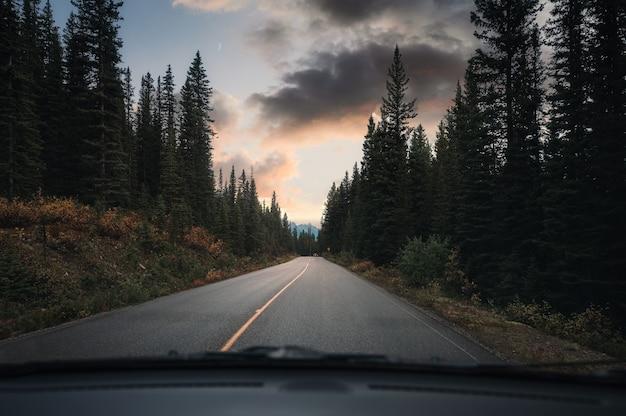 カナダのバンフ国立公園で夕方に松林の高速道路を運転するロードトリップ車