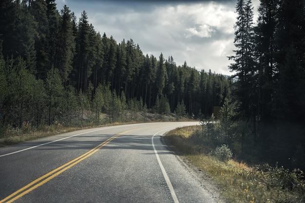 バンフ国立公園の松林で曲がったアスファルト高速道路のロードトリップ