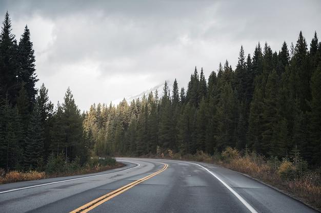 밴프 국립 공원에서 흐린 소나무 숲에 햇빛과 고속도로 도로에서 도로 여행