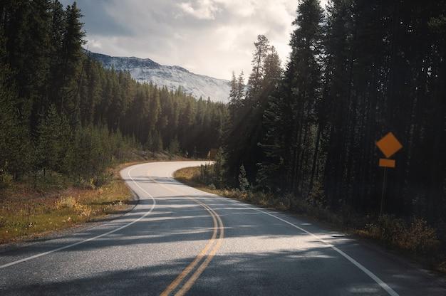 캐나다 밴프 국립공원의 숲 속을 햇빛이 비치는 고속도로 도로 여행
