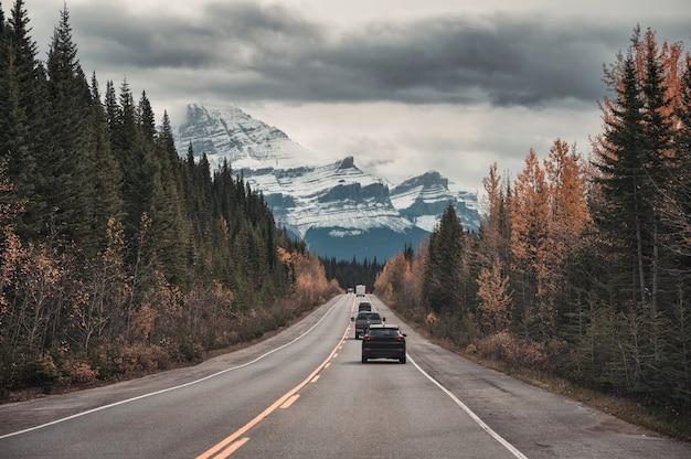 캐나다 앨버타주 밴프 국립공원의 록키 산맥이 있는 가을 소나무 숲의 고속도로에서 자동차로 운전하는 도로 여행