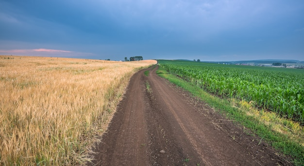 A road between two fields