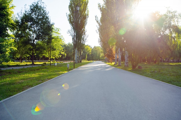 The road way in the city park with trees and grass