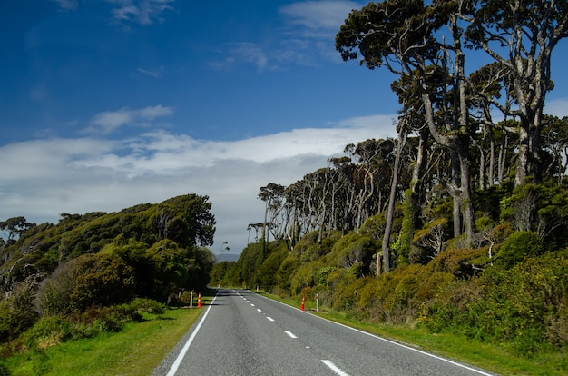Road in west coast, south island, new zealand