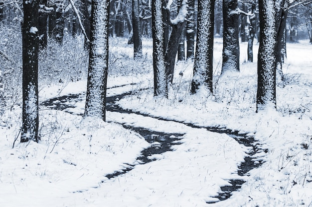 Road in the winter forest among the snow-covered trees