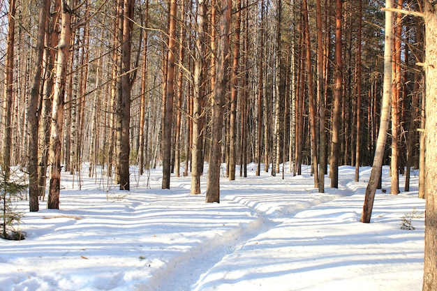 Road in winter forest.