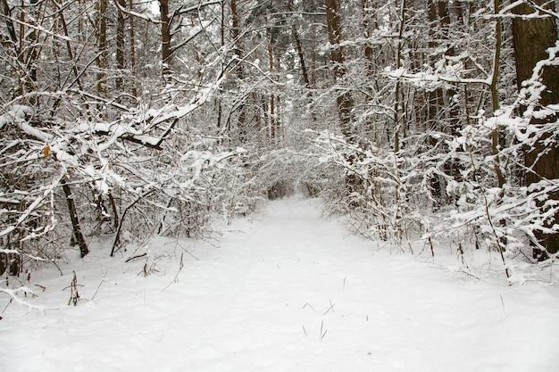 The road in winter season. frost.