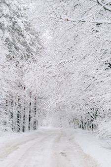 A road in a winter snow-covered forest