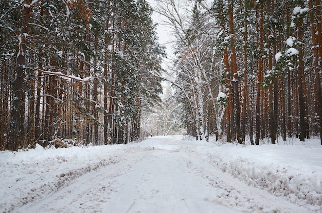 Road in the winter with snow-covered forest