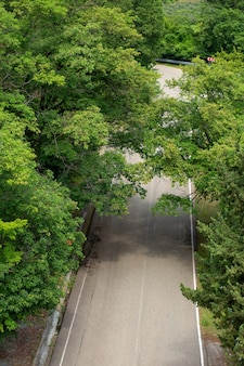 Road with beautiful scenic green trees, top view, vertical
