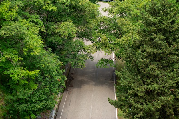Road with beautiful scenic green trees, top view