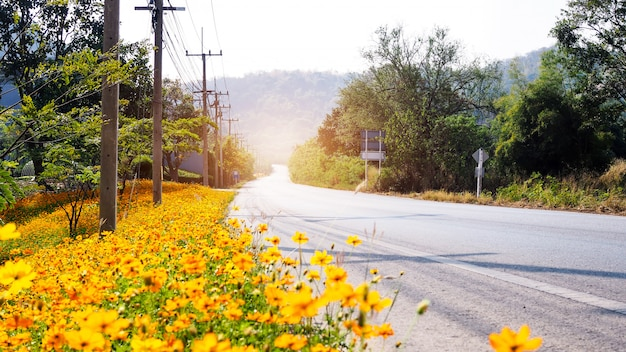 On road with blurred yellow flowers. traveling in thailand with beautiful view of mountains at khao yai thailand.