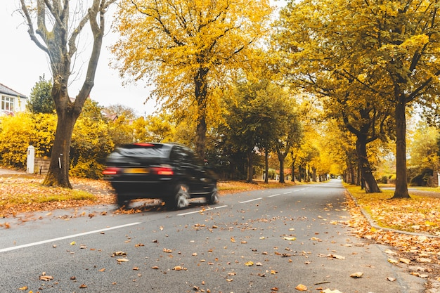 Road with car, autumn trees and leaves