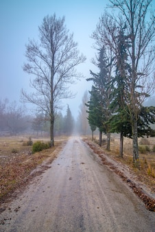 霧と端に木がある道路