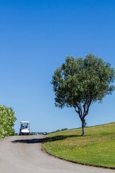 Road with golf cart car and a lonely tree on a golf course.