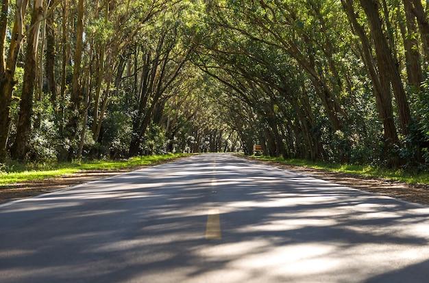 유카 필토 나무에 의해 형성된 자연 터널이있는 도로