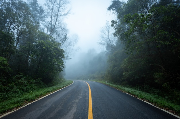 Road in with nature forest and foggy road of rain forest.