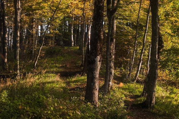 風光明媚な秋の森のオレンジと緑の葉のある道