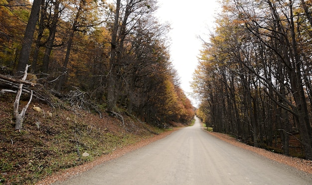 Road with trees.