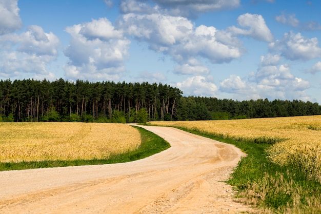 田園地帯、春または夏の風景のアスファルトのない道路