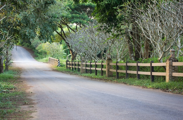 Roadway natural with tree at countryside. in thailand