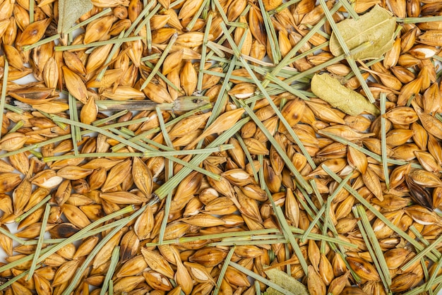 Roasted barley and dehydrated horsetail plant of different kind from pils to roasted. top view. macro photography.
