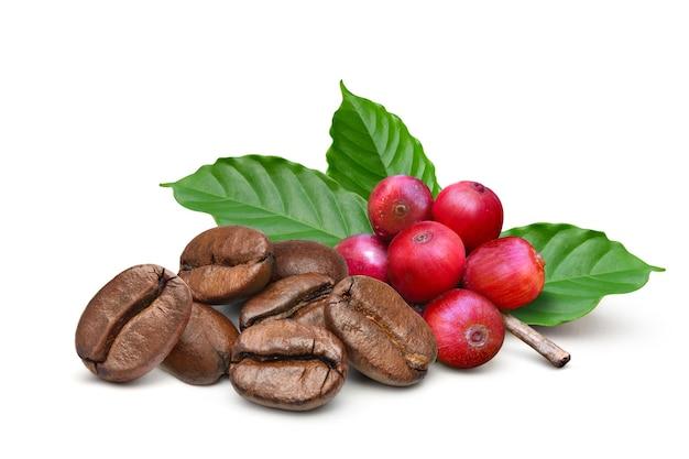 Жареные кофейные зерна с красными кофейными зернами и листьями, изолированные на белом фоне.