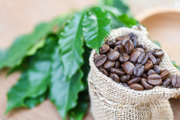 Roasted coffee in sack with green leaf on wooden table background in the morning