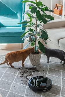 工場の隣の自宅で汚れたカーペットや猫を掃除するロボット掃除機