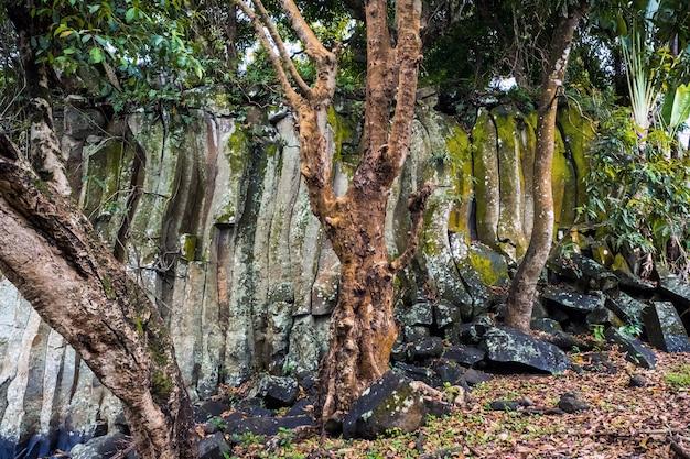 로체스터 폭포 근처 모리셔스 섬에 바위와 나무.