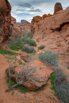 Rock desert in nevada