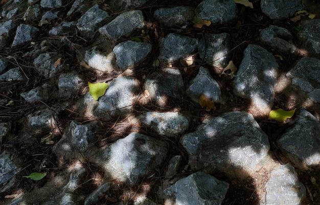 Rock floor under a tree shade in sunny day
