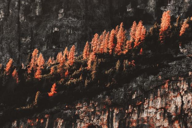 Горная порода в окружении деревьев