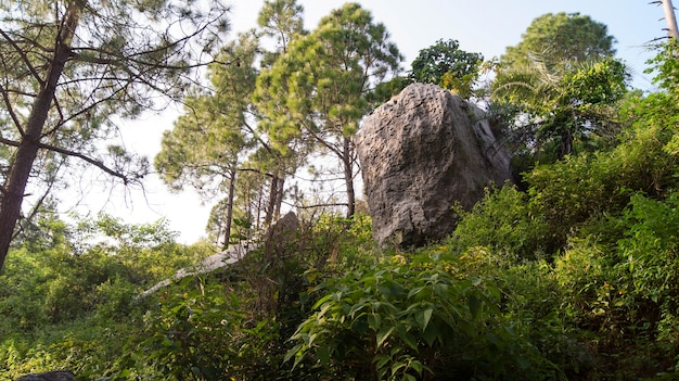 Rock in the greenery landscape photo