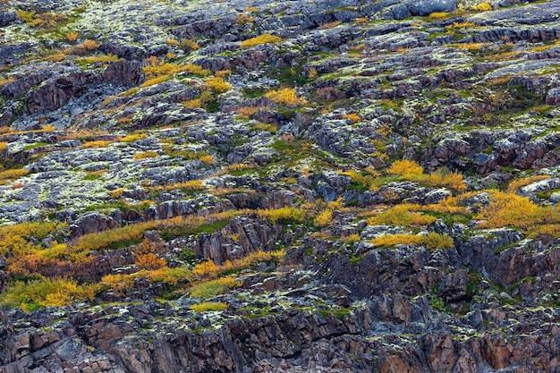 ツンドラの岩、植物、苔、地衣類で覆われた山の斜面。コラ半島、ロシア。