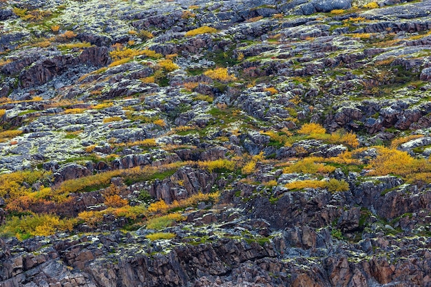 Rock, mountain slope covered with vegetation, moss, lichen in the tundra. kola peninsula, russia.