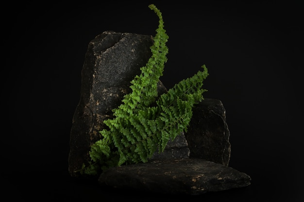 Rock podium on the black background with tropical leaves. stone podest for product, cosmetic presentation. creative mock up. pedestal or platform for beauty products.