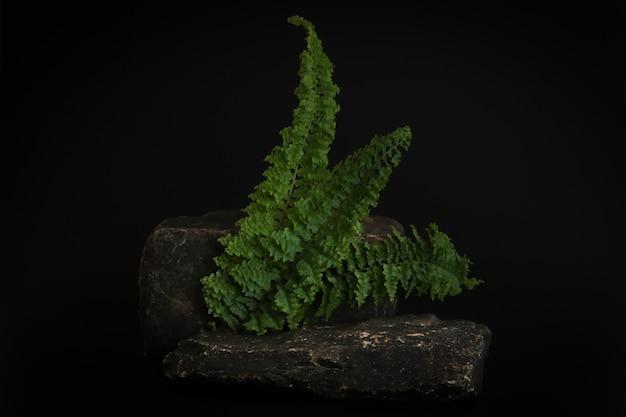 熱帯の葉と黒の背景に表彰台をロックします。製品、化粧品のプレゼンテーションのための石のポデスト。クリエイティブなモックアップ。美容製品の台座またはプラットフォーム。