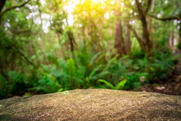 タスマニアの製品展示ジャングルのロックテーブル