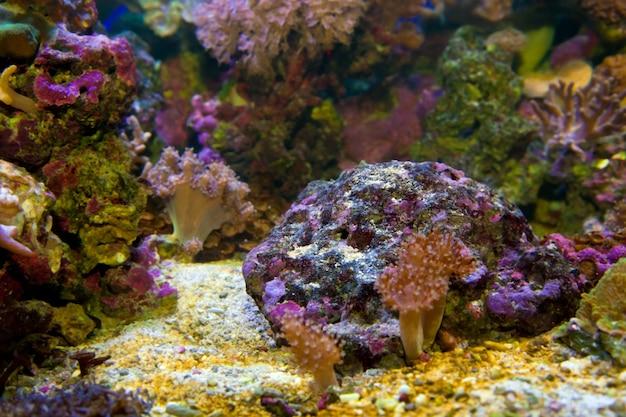 Rock with purple sediments