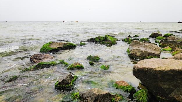 Скалы, покрытые зелеными водорослями на берегу моря, пляж