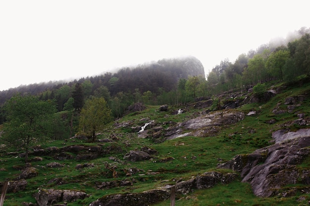 Rocks covered with greenery and thick fog