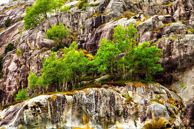 黄色い苔と緑の木々に覆われた岩