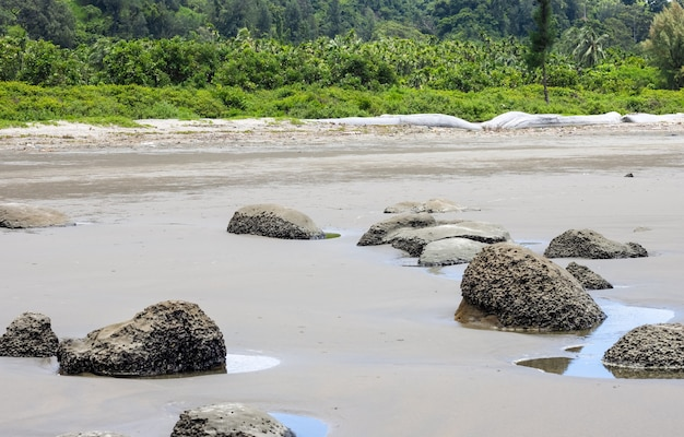 Rocks on a sandy sea beach near the forest