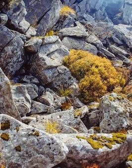 Скалы с растениями в карпатах. текстуры природы, рвение к жизни