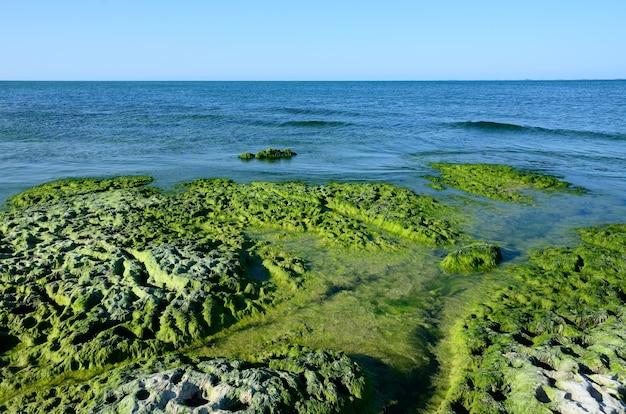 夏に藻で覆われたカスピ海の岩の多い海岸