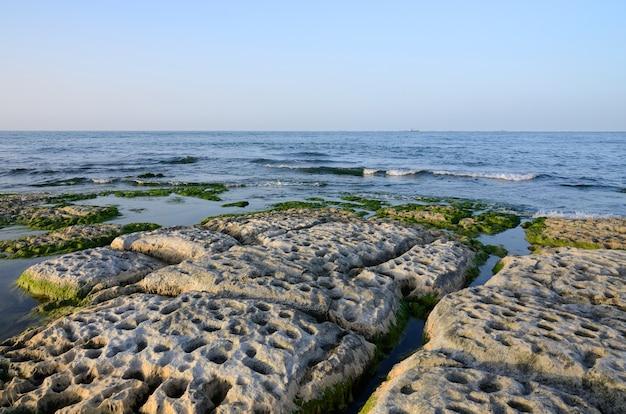 藻で覆われたカスピ海の岩の多い海岸